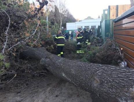 crolla albero all'eur