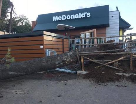 Crolla un albero al Luneur donna in gravi condizioni Blog Roma